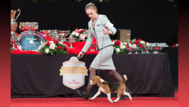 Photo of ESPN, AKC Enter Multi-Year Agreement for Telecasts of Dog Sport Competitions